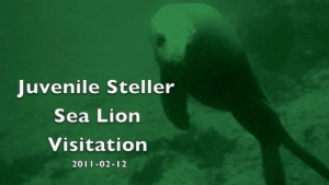 Screen grab from Steller encounter 2011-02-12