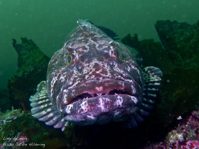 Serious teeth. ©2012 Jackie Hildering.