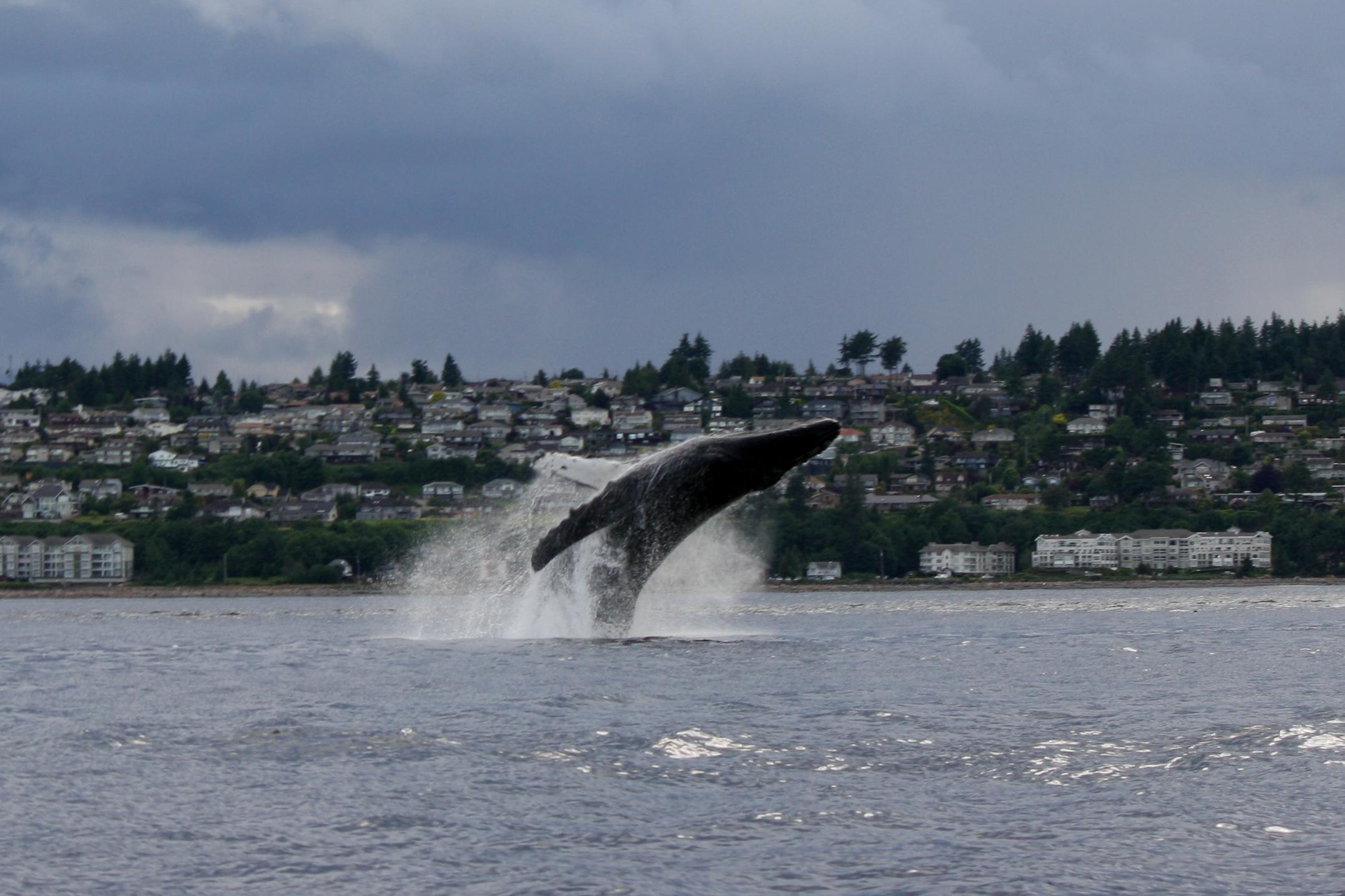 Oak And Orca Vancouver Island