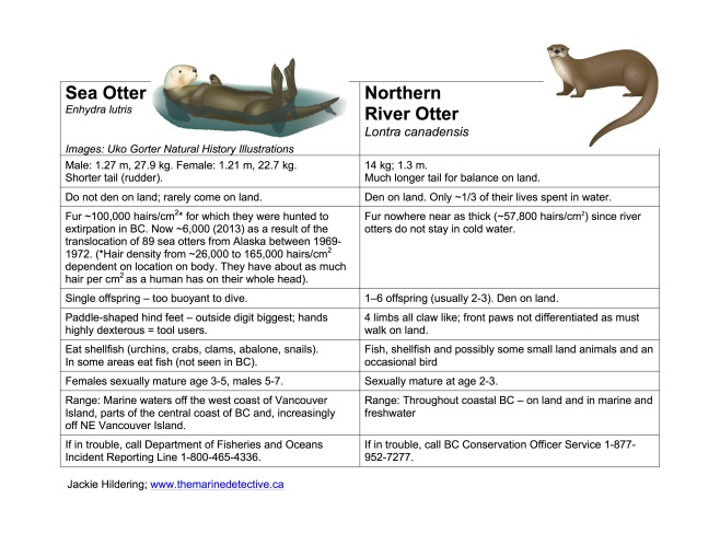 Click to enlarge. Table showing differences between sea otters and river otters (by Hildering). Updated 2015-05-24.
