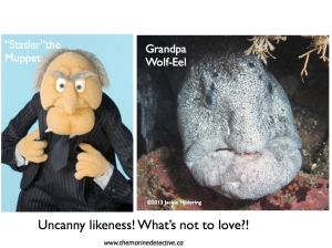 Statler the Muppet is cute and loveable. Ergo - so are wolf-eels. Case closed!!