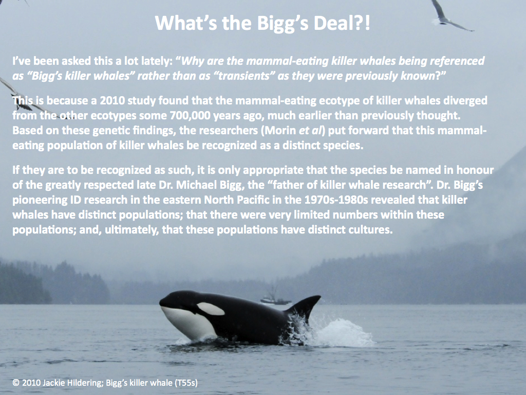 killer whale research paper Southern resident killer whale research publications  inferred paternity and  male reproductive success in a killer whale (orcinus orca) population journal .