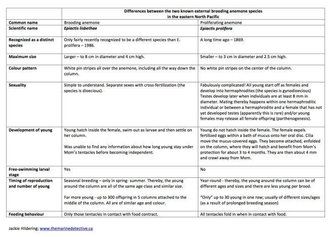brooding vs. proliferating table