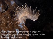 nudibranch 1 P4280206