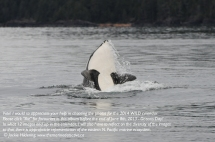 orca 2 T_2012-12-31_JH_Craycroft Point-3591