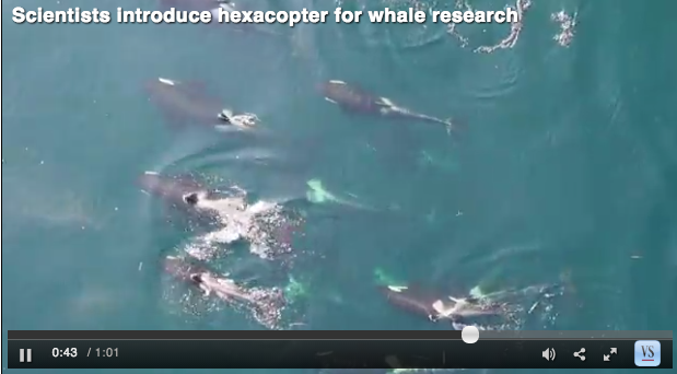 Video taken with the Olympus EPL2 camera mounted to the APH-22 marine hexacopter. Note that the whales would not hear what you are hearing in this video as the camera is 30m or more above the whales. If video does not load go to http://tinyurl.com/pjz3hpf