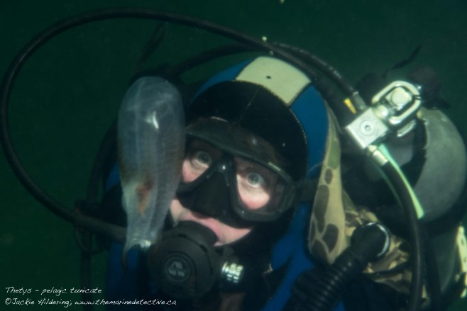 Dive buddy with Thetys. ©2015 Jackie Hildering