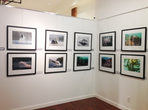 """""""The Marine Detective"""" images at Art Atelier 546 in Victoria (on 546 Yates Street). Click to enlarge."""