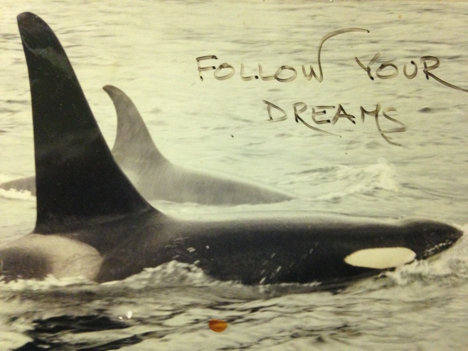 Follow Your Dreams . . . Northern Resident Killer Whales: Tsitika (A30, 1949 - 2013) and her son Pointer (A39, 1975 - 2014. Photo taken in 1999. ©Jackie Hildering; www.TheMarineDetective.ca