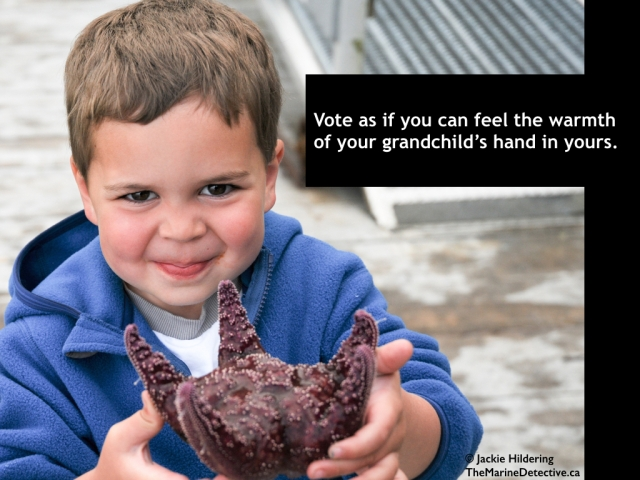 Vote as if you can feel the warmth of your grandchild's hand in yours. Spencer Wilson meets an Ochre Star. As so many here are aware, it is a critical time of decision-making. In this #OceanVoice album, I will share memes directed at increasing hope; awareness of our connection to the environment; and positive action for the sake of greater health and happiness. ©2015 Jackie Hildering; #OceanVoice; www.TheMarineDetective.ca