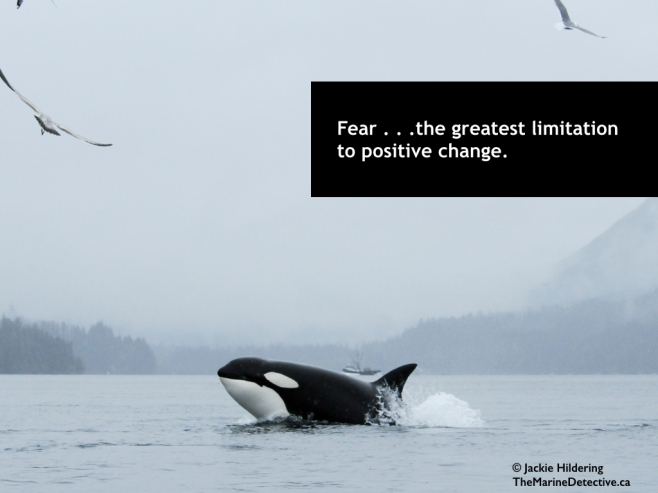 Fear . . . such a limiting factor to positive change. A lesson learned from Killer Whales - how wrong we can be but how quickly we can change when fear and misunderstanding are replaced by knowledge and connection. Yes, fear sometimes saves lives but too often: Fear masks truth. Fear chokes potential. Fear makes us automatons, marching on, ignoring the reality around us. Fear walks hand-in-hand with disempowerment, the same neurons firing, limiting the way we look at the world and ourselves. And above all, FEAR LOATHES CHANGE. Thereby, fear is such a powerful tool to be used by those who benefit from things remaining the same. #OceanVoice - thoughts about hope, our connection to the environment, and positive action for the sake of greater health and happiness. ©2015 Jackie Hildering; #OceanVoice; www.TheMarineDetective.ca