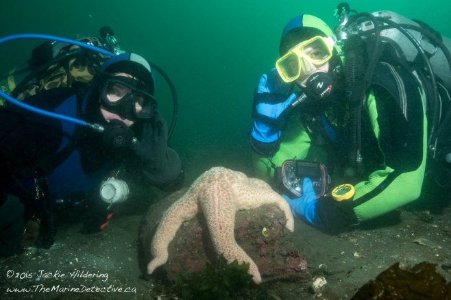 Dive buddies near Giant Pink Star. Left, Natasha Dickinson. Right, Alexandra Spicer. ©Jackie Hildering; themarinedetective.ca.