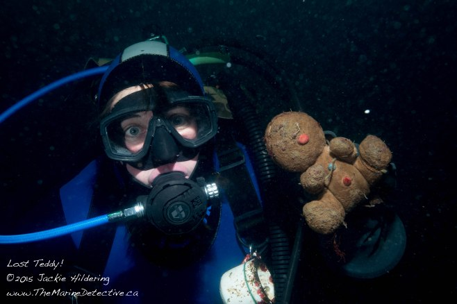 Lost Teddy! Wouldn't it be remarkable to find out how, where and when s/he ended up in the Ocean?