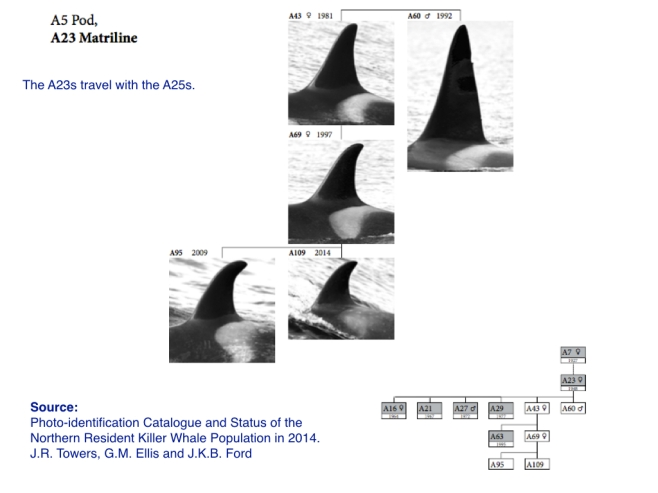 The A23s from the Photo-identification Catalogue and Status of the 