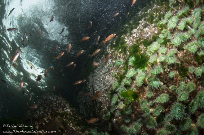 View towards the surface. ©Jackie Hildering.